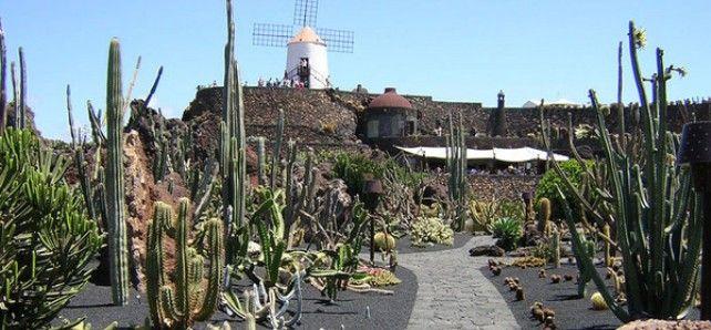 El diario de navarra elige al jard n de cactus como uno de for Los jardines esquelas
