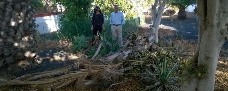 Piden A La Onu Reconocer El Medio Ambiente Limpio Como: El Concejal De Parques Y Jardines Pide Paciencia A Los