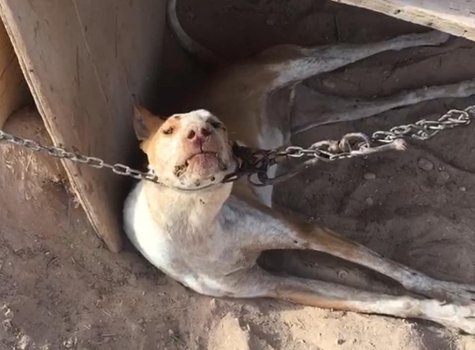 """Ademal denuncia maltrato animal en una """"finca del horror"""" en Tinajo donde  ya ha muerto un perro"""